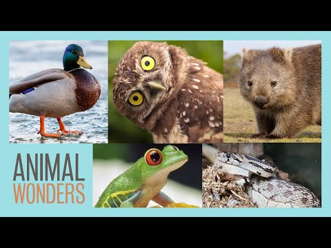 Neat Animal Facts | Compilation