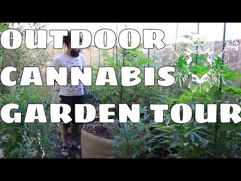 Outdoor Cannabis Garden Tour | How to Grow Outdoor Weed | Watch Marijuana Grow