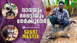 Wow ! Vava Suresh, Palm Civet Face off | Snake Master | Latest Episode