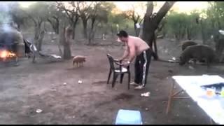 Jurio prase,svinja napala njega/ Pig in action thumbnail