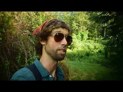 Sumac! Wild Food/Medicine Adventure Part 2- Identifying Natures Lemonade Alternative