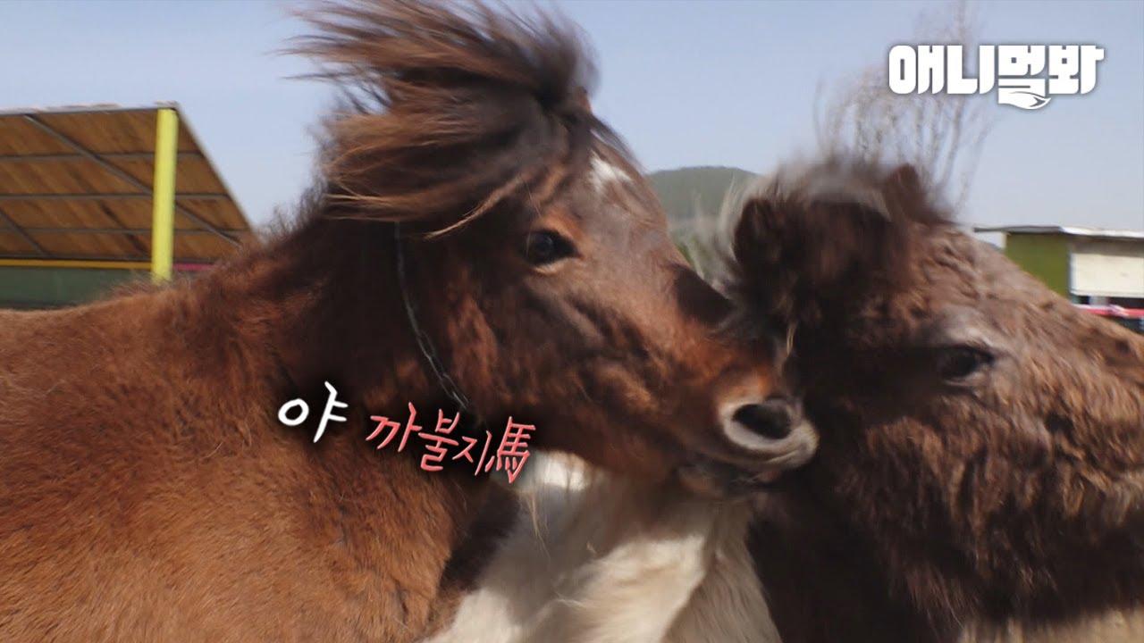 싸우지 馬란 말이야.. 한 여자를 사랑하게 된 죽마고우 세친구🤦ㅣThree Pony Besties Fell In Love With One Lady