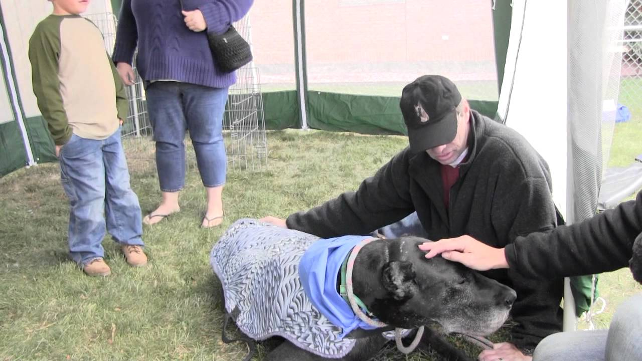 Great Dane Rescue Midwest