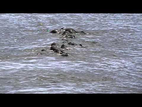 Elephants River Crossing