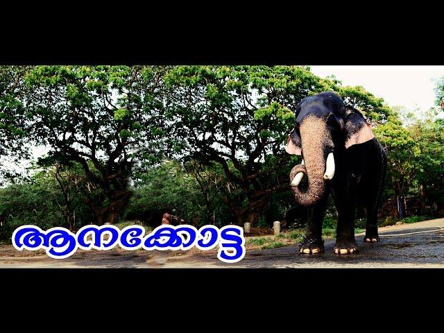 A Rare Scene From Guruvayoor Aana Kotta