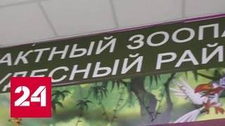 видео День рождения в контактном зоопарке Москва