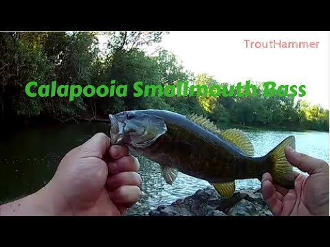 Fishing Calapooia River For Smallmouth Bass