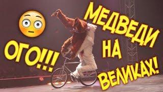 Медведи на велосипедах!Цирк! Наш крутой цирковой номер на ТВ! В конце чудим!!!)))(Это наша новая постановка!)) сделал ее талантливый режиссер. Угадайте где на этом видео я) пишите в коменты..., 2016-03-11T03:33:49.000Z)
