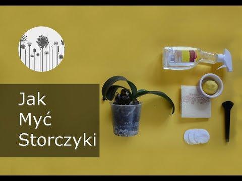 Pielęgnacja storczyka. Jak myć liście storczyków?