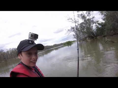 Losing My First Metre Fish While Fishing For YellowBelly With SpinnerBaits With Light Line