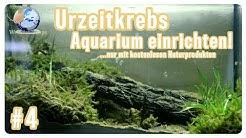 Urzeitkrebsaquarium einrichten! Kostenlos mit Naturprodukten // Triops Spektrum