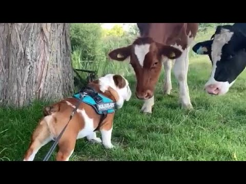 Funny Dog Videos July 2020 – Try Not To Smile Challenge!