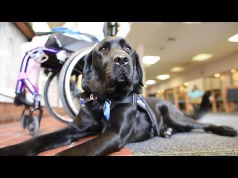 Dax The Service Dog
