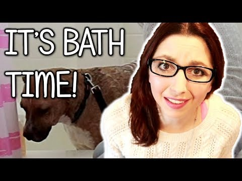 Giving My Dog A Bath! (Bathing My Dog To Reduce His Itching)