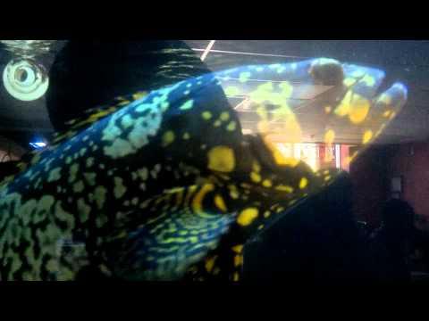 Black Tip Shark At LFS King Aquarium In San Jose