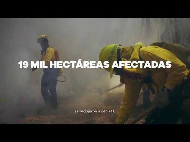 Cuidemos nuestros bosques - Gobierno de Michoacán