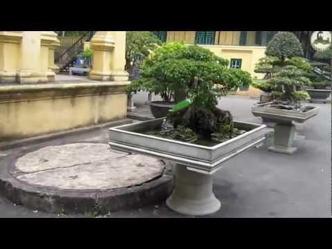 Tham quan cây cảnh bonsai, đá nghệ thuật tại Hoàng Thành Thăng Long [vinabonsai]