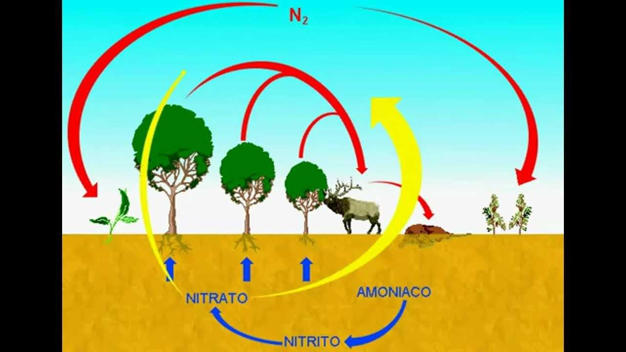 Image result for El nitrógeno de la atmósfera por sí mismo no es respirable, pero cumple un ciclo de vital importancia para la naturaleza y los seres vivos, incluidos los seres humanos