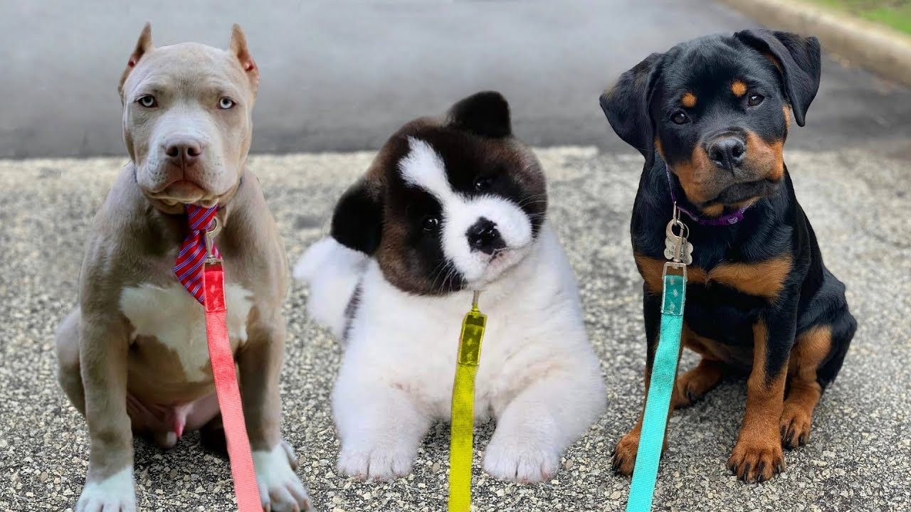 10 Dogs Have The Cutest Puppies Ever