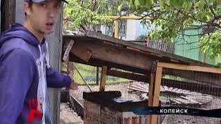 Стая бродячих собак держит в страхе поселок в пригороде Челябинска