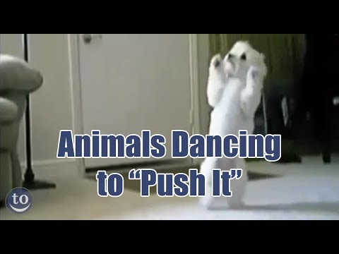 Animals Dancing To 'Push It' Will Instantly Improve Your Day