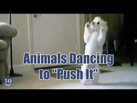Animals Dancing to Salt-n-Pepa's 'Push It'