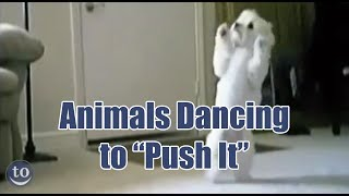 animals dancing to salt n pepa s push it