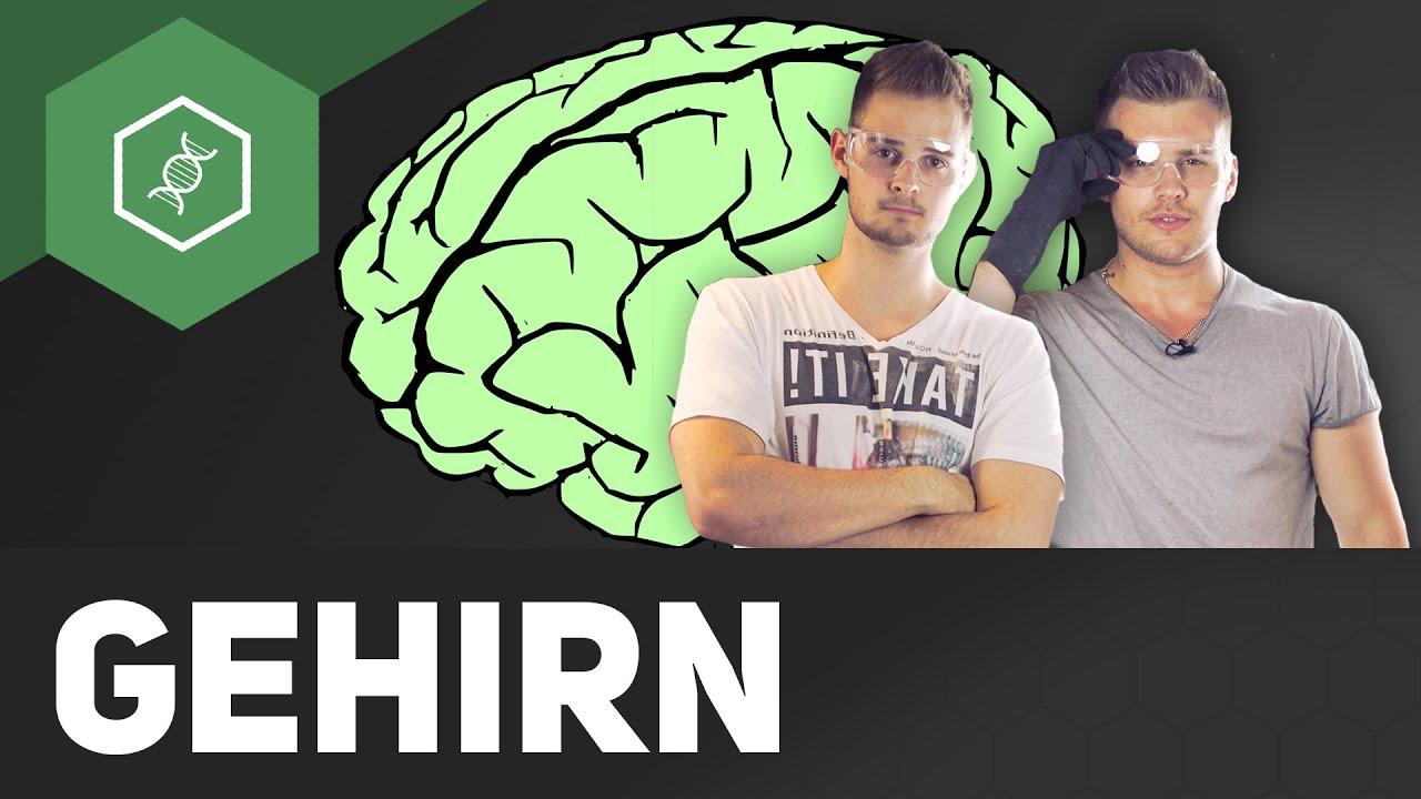 Wie funktioniert unser Gehirn?! - Teil 1 - YouTube