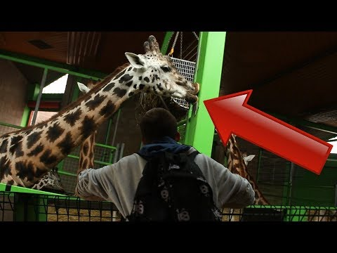 WHATS GOING ON IN BELFAST ZOO ???