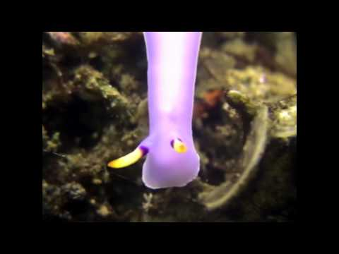 WaterdogsVideo: Papua New Guinea - Tawali Resort