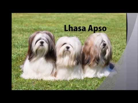 Cute Dog Puppy Videos 2015 || All Dog Breeds List In The World (A to Z) || Cute Puppies