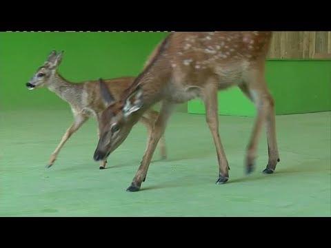Dressage d'animaux pour le cinéma à Sury-aux-Bois (Loiret)