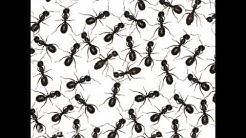 Kendrick Pest Control Inc. La Salle IL 61301-2539