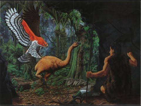 The Haast's Eagle: The Man Hunting Eagle