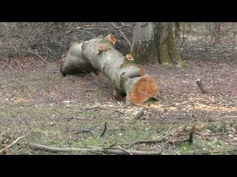 Jongen boompjes gepland in het bos