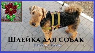 Шлейка для собак средних и крупных пород Эрдельтерьер
