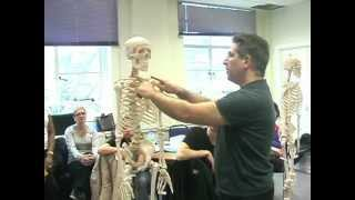 Introduction to Anatomy and Physiology & Skeletal system