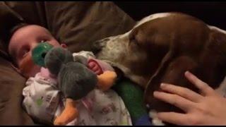 赤ちゃんの最期を看取った犬の姿に、世界中が涙する【泣ける話】