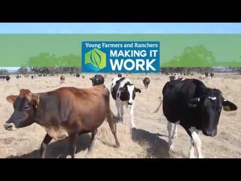 Running an organic dairy