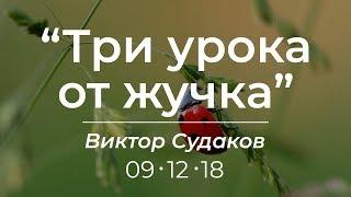 Виктор Судаков - Три урока от жучка