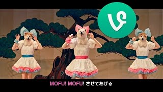 MOFU MOFU☆DOGS! Ahah! It's crazy! ;D Thanks for watching! Last vine...
