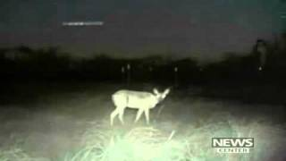 UFO over Texas. Game camera captures Lights