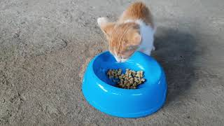 Kitten Eat His Favourite Food Rapidly