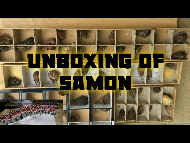 Unboxing How to determine a Samon