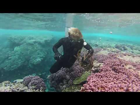 Kittiwake hits the reef!