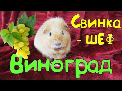 🍴 Свинка-шеф  🍇ВИНОГРАД🍇
