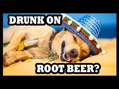 Root Beer Finally Gets You Drunk! - Food Feeder