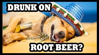 Root Beer Finally Gets You Drunk! - Food Feeder