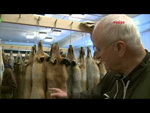 Swiss hunters take fox furs to market