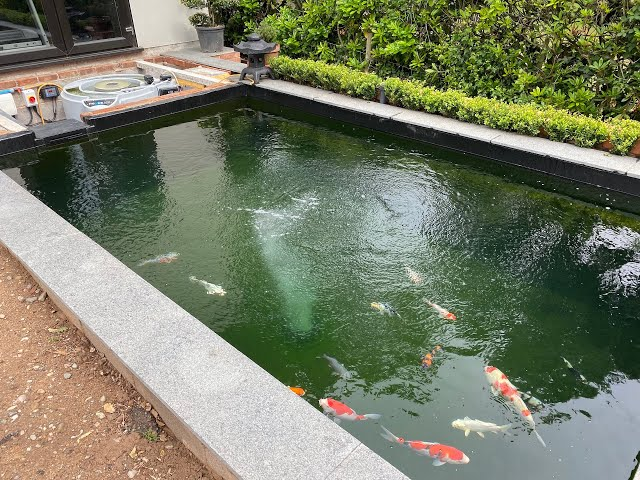 5000 Gallon Pond  - NEXUS 320 - K1 MICRO BEAD!